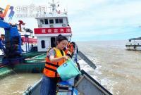 一条鱼堪比一瓶茅台酒 今年东海野生大黄鱼捕获量有所增加