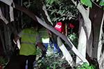 警惕!宁波60岁老人从树上摔下来致高位截瘫 又是为了它……