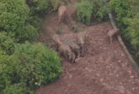 北迁象群在玉溪易门县小范围迂回迁移