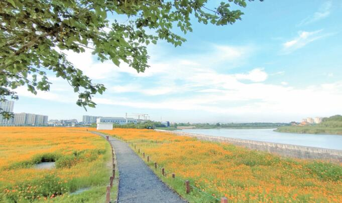 时尚滨江休闲线新添一片7万平方米花海