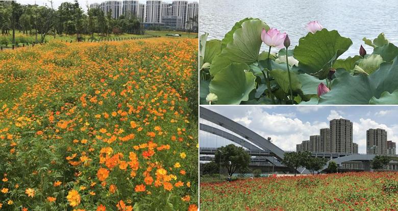 花海无缝衔接鄞州公园 未来这里将成为一座综合性公园