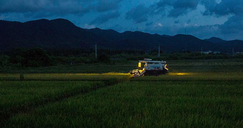 """台风""""烟花""""来袭 村民连夜抢收稻谷"""
