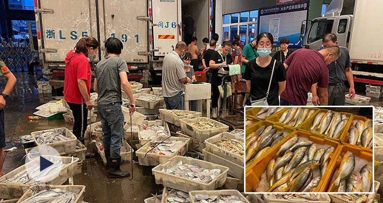 透骨新鲜!全面开渔后的第一网海鲜抵甬 吃货们有福了