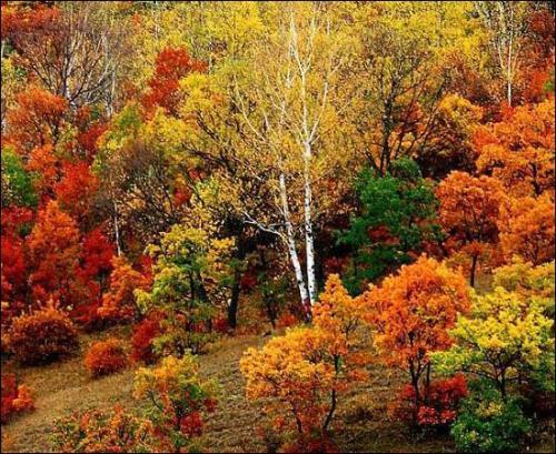 秋天 欣赏 静静/静静的欣赏 秋天美景[组图]