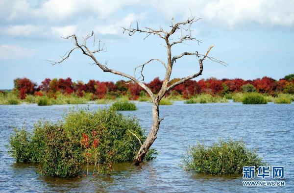 """直击洪水""""侵袭""""下的黑瞎子岛"""