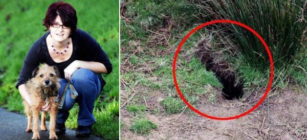 到处都 是兔子洞 ,远远的能看到小兔子,一走近它就钻进洞里找不到了.