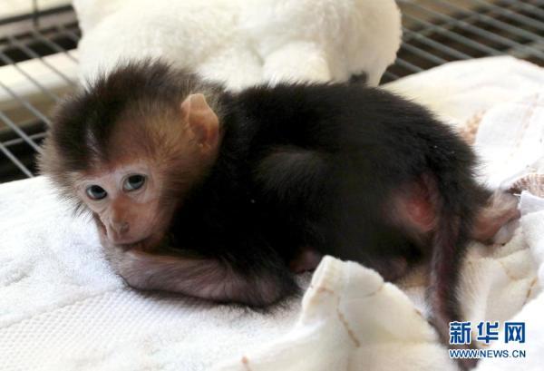 上海动物园60年来繁育200余种珍稀动物(图)